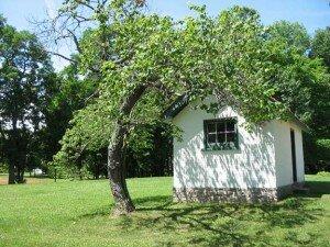 bowed-tree